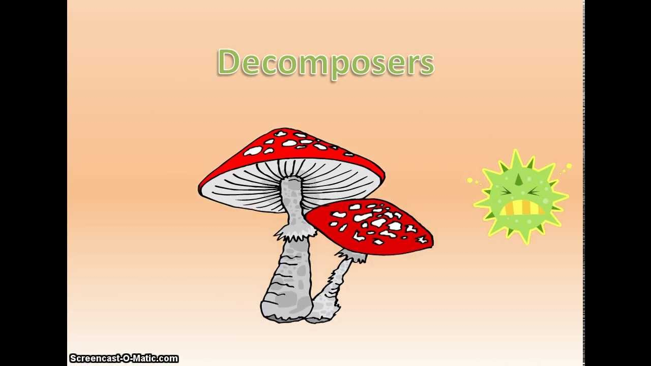 which is an example of a decomposer