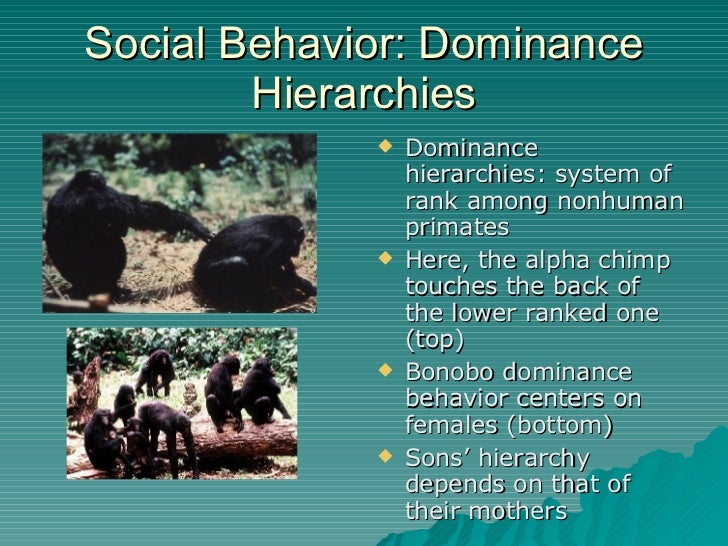 define codominance and give an example