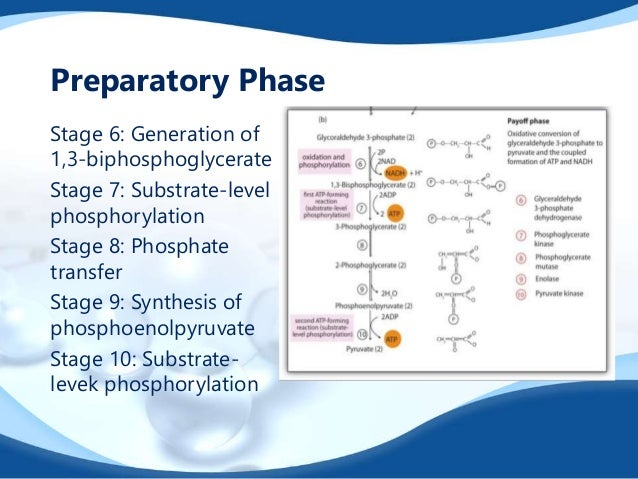 cellular respiration is an example of an exergonic reaction