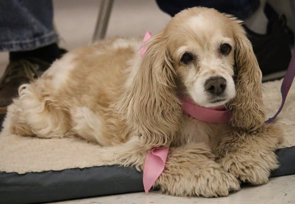 example of clipper eared dogs